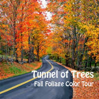 Tunnel Of Trees Fall Foliage Color Tour On M 119