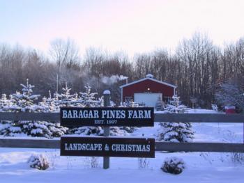 Baragar Pines Farm