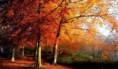 Enjoy Michigan's Best Fall Colors