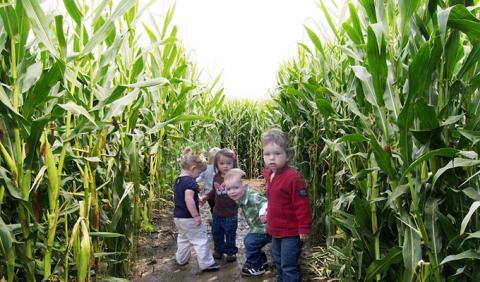 Michigan's Best Corn Mazes