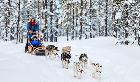Michigan Dog Sledding Adventure