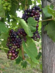 Oceana Winery & Vineyard